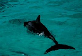 dolphindark